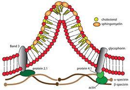 abetalipoproteinemia.jpg