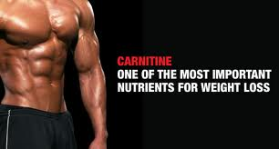 Carnitine Benefits - Functions in The Body