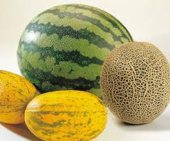 Benefits and Uses of Melon