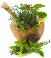 Herbs Information - Natural Herbs for Good Health